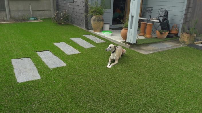 pas japonais et pelouse artificiel
